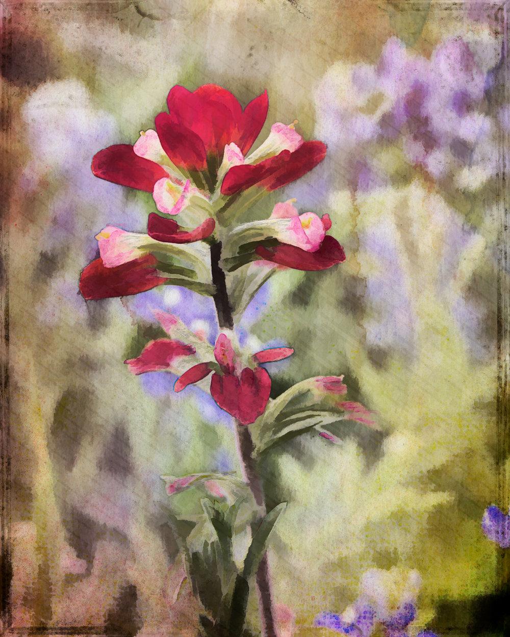 Wildflower-1-144.jpg