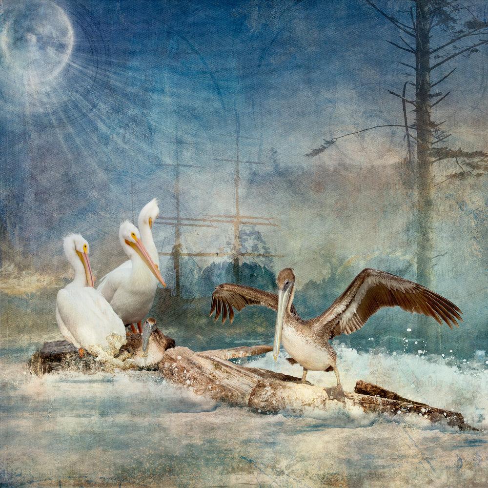 Pelicans by the Sea (med)-150.jpg