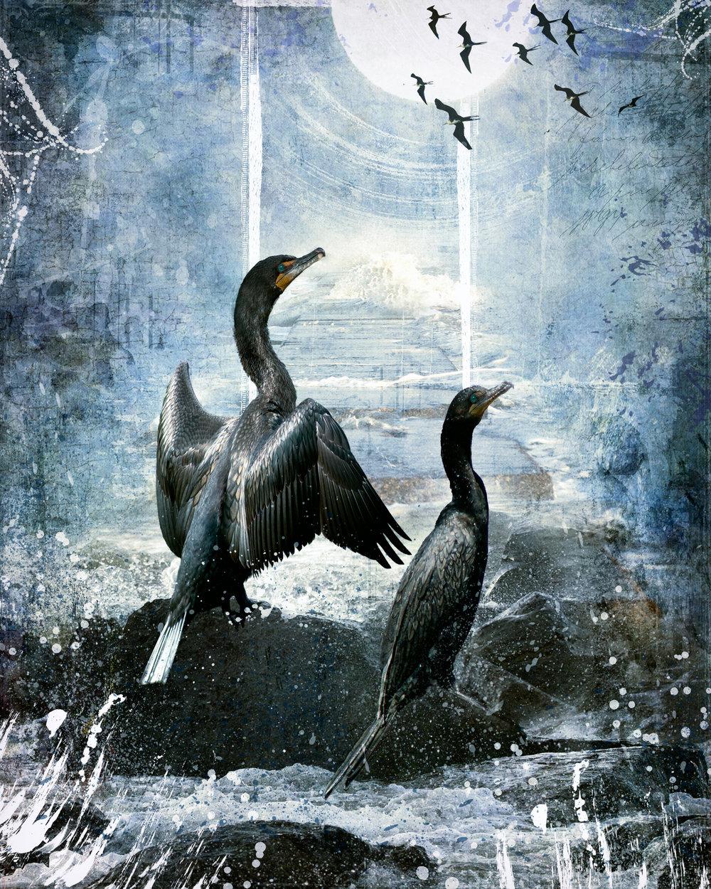 Cormorants-157.jpg
