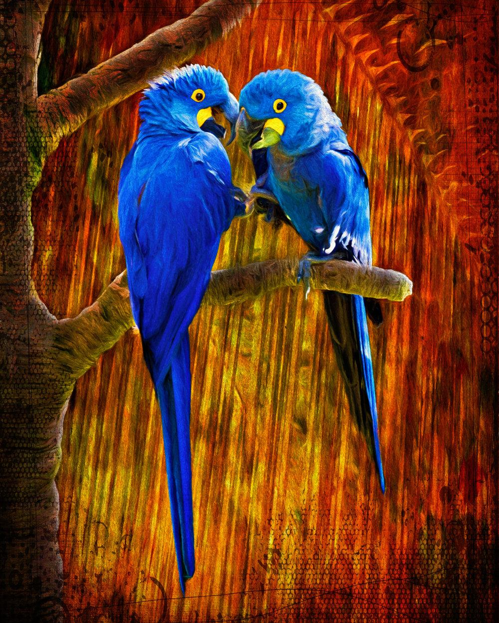 Moody Parrots-170.jpg