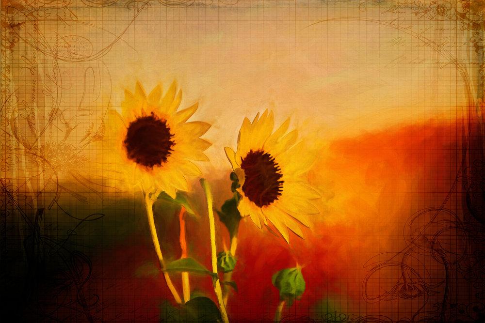 Sunflowers (Full)-183.jpg
