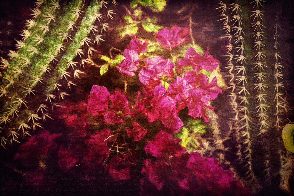 Cactus and Bougainvalla 2-189.jpg
