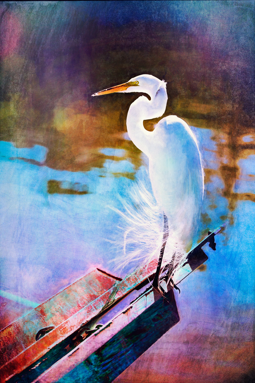 White Crane Full-195.jpg