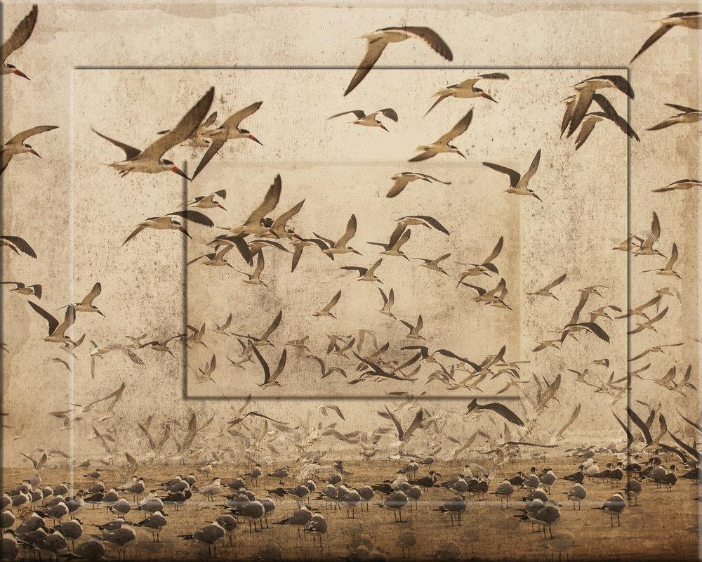 Framed Skimmers (Full)-227.jpg