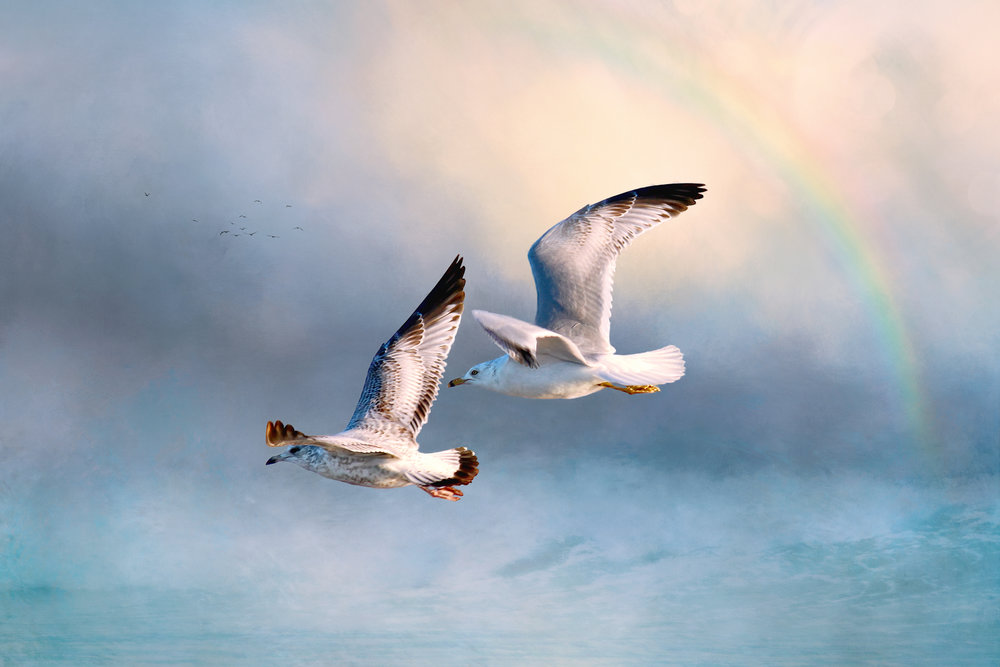Super Seagulls-226.jpg