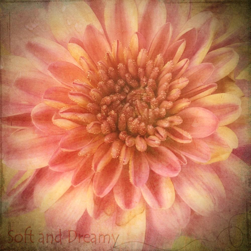 Soft and Dreamy-235.jpg