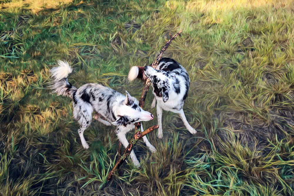 Dogs with Stick.jpg