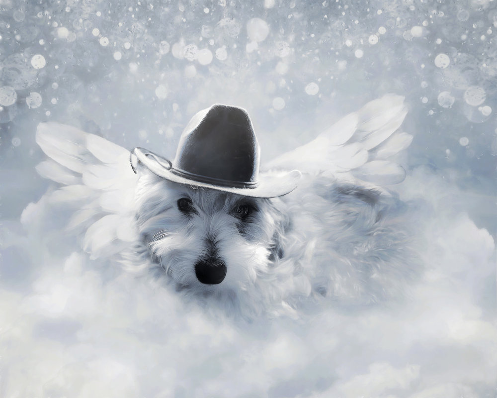 Lucky in Hat (small).jpg