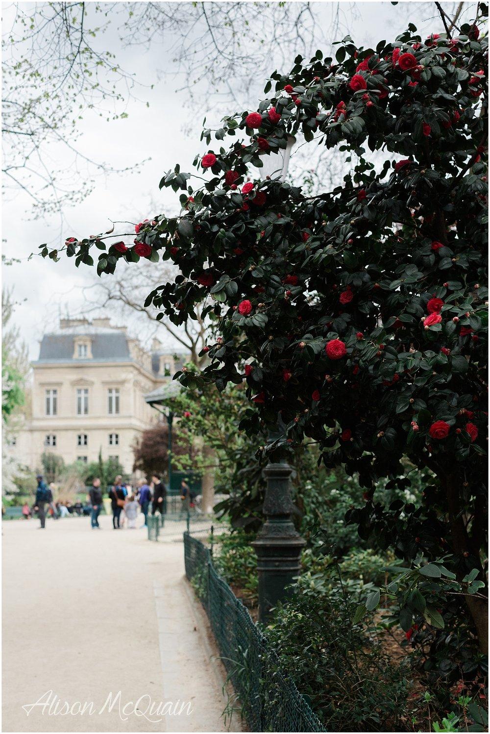 France_Paris_Marseille_Cassis_alisonmcquainphtography2018-04-27_0016.jpg