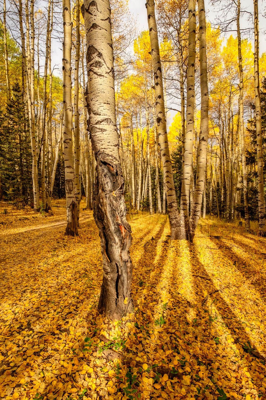 Colorado-46.jpg