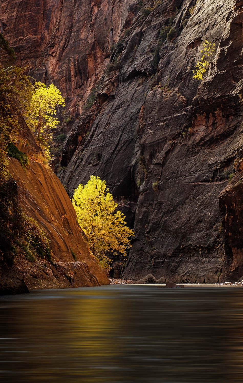 Canyon Life