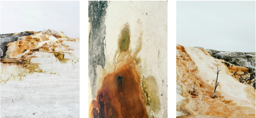 collage1.1.jpg