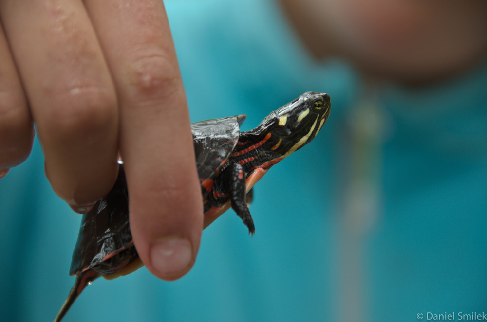Anna holding the painted turtle.