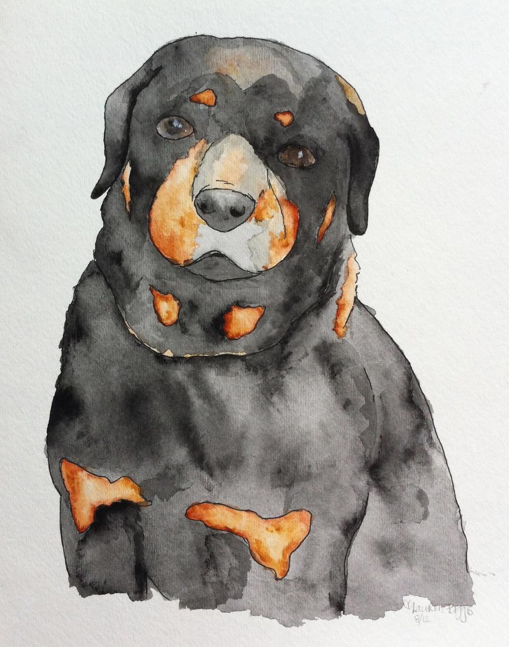 dog14.jpg