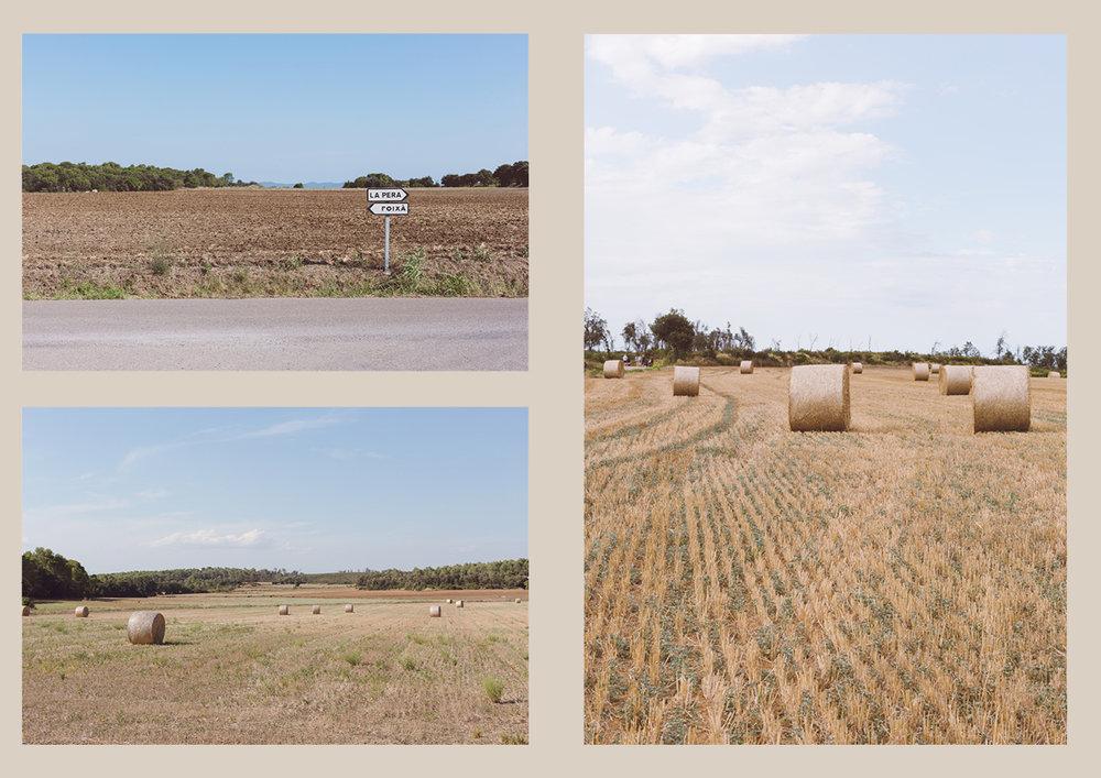 Fields2.jpg
