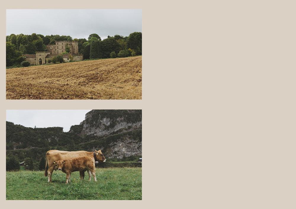 Fields7.jpg