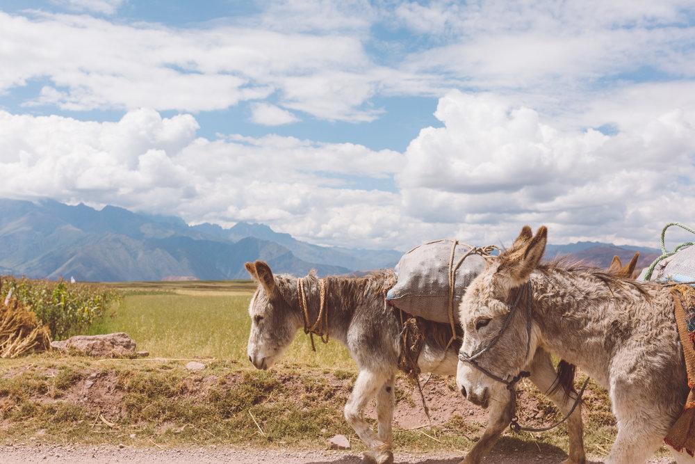 Cusco, Perú -