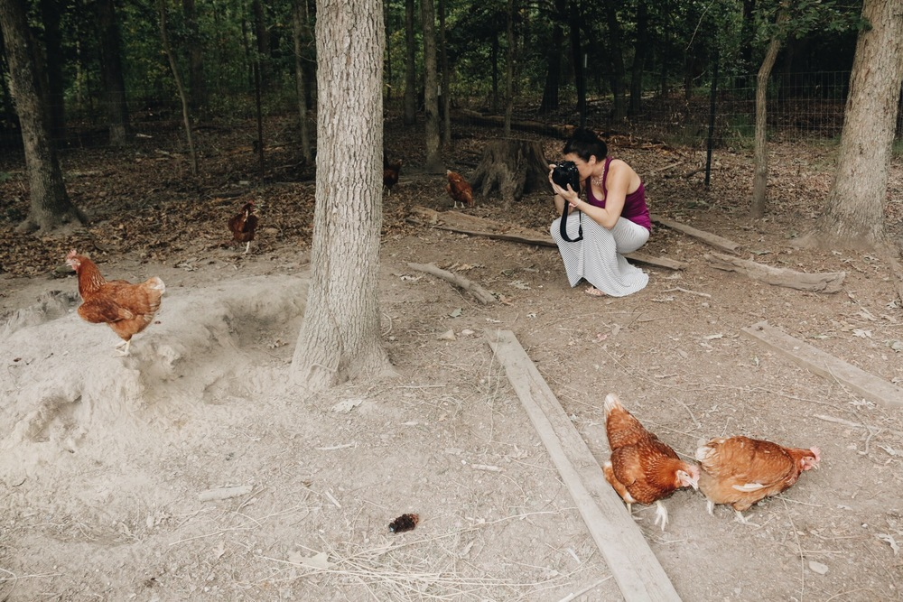 Kristen Penoyer photographs hens in Richmond, Virginia.