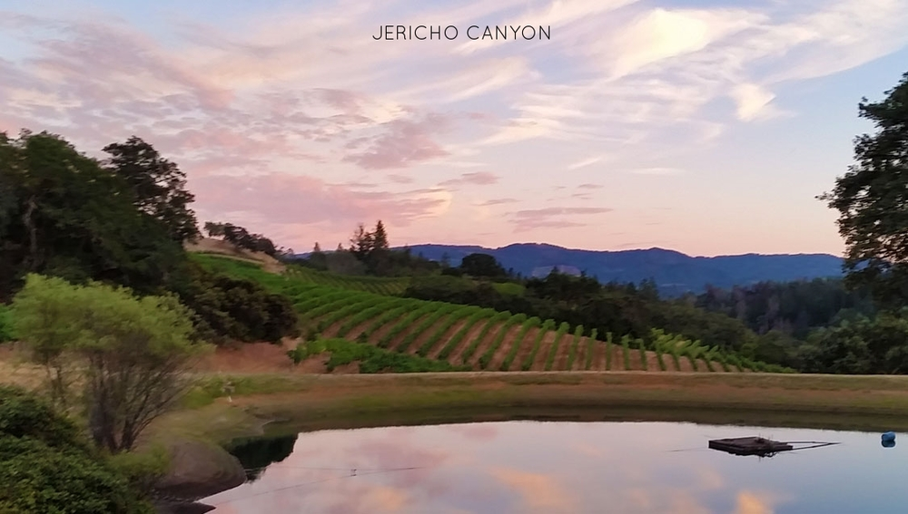 mcneese-wine-vineyard.jpg