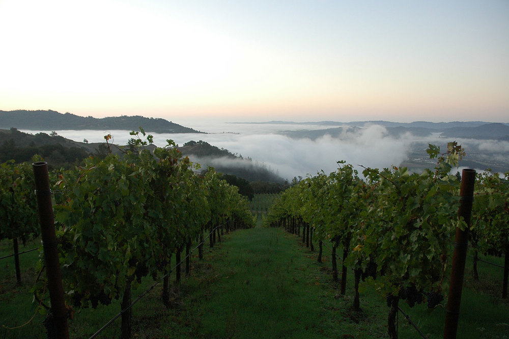 arbios-vineyard-10-25-Harvest-2011-002.jpg