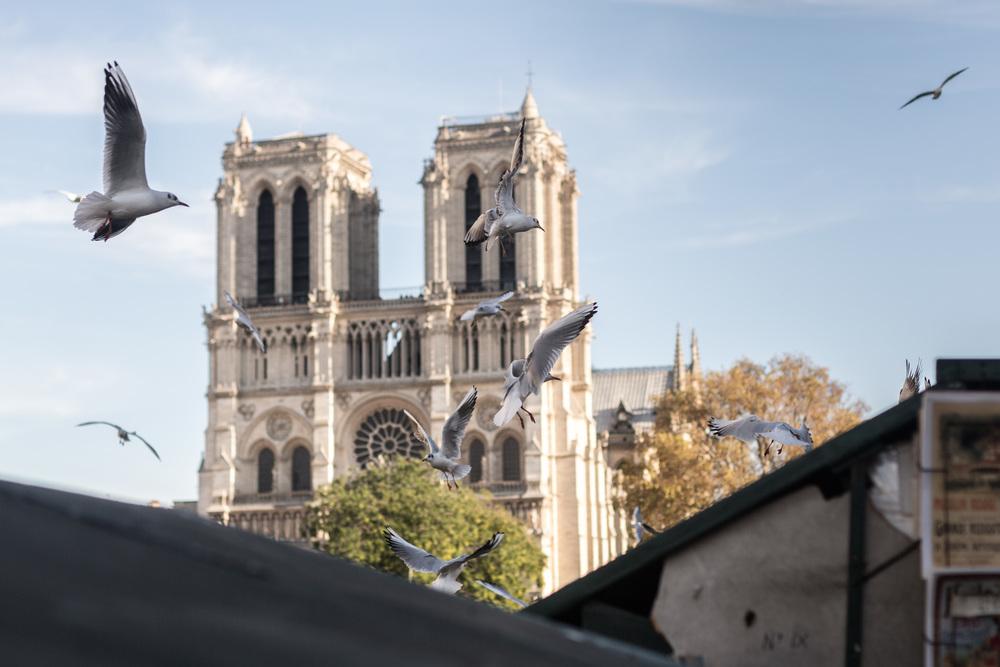 France 2015 - therearmirror.com-12-28.jpg