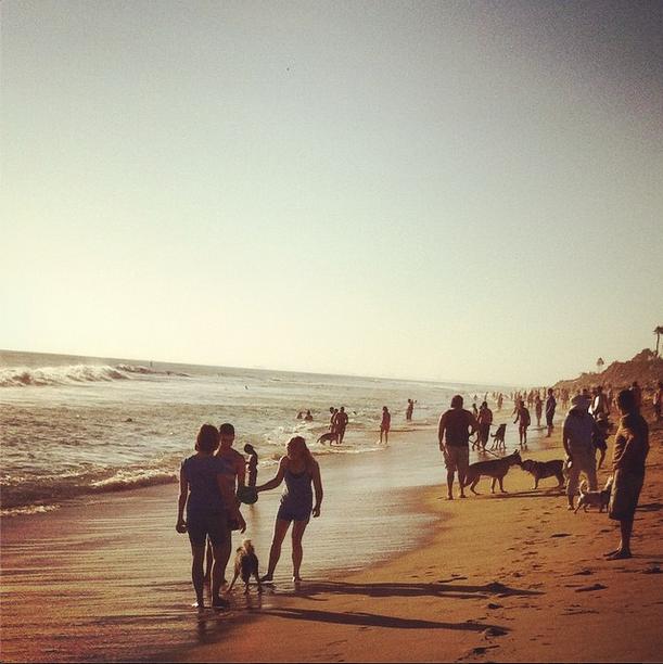 Dog Beach.