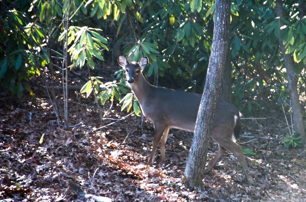 170126 Deer 1 (1 of 1).jpg