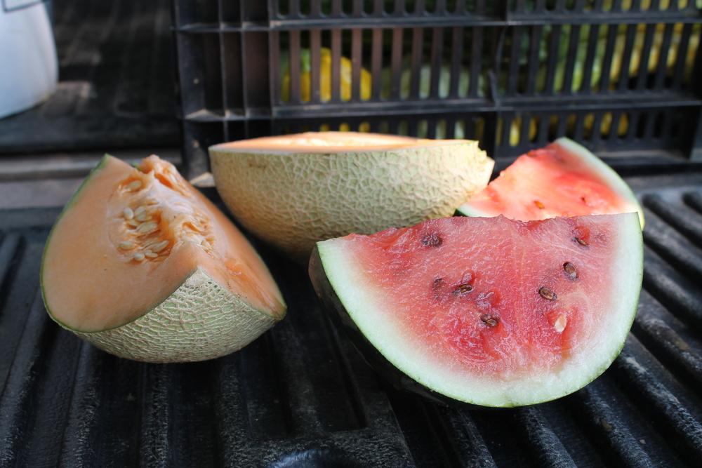 melons 003.JPG