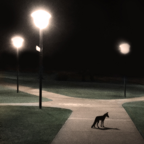 Fox Robertson's Pause