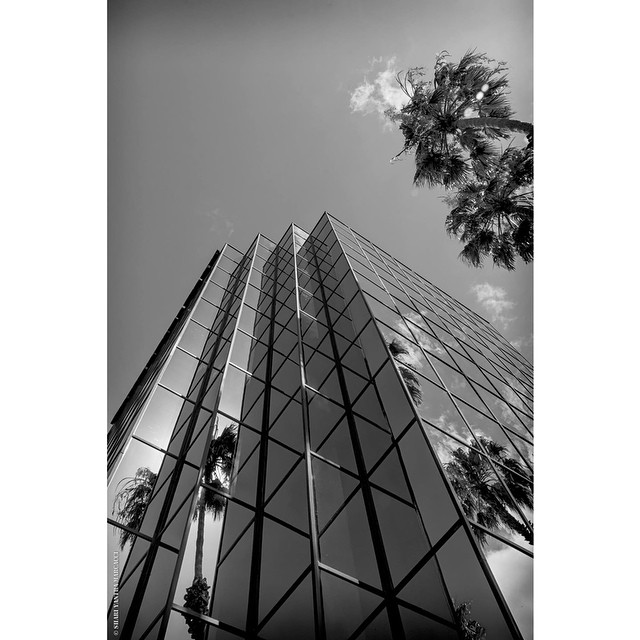 #losangeles, #studiocity #cityscapes #city #blackandwhite #palmtree #sky #photography #shariyantraphotography   Photo by Shari Yantra Marcacci 2014
