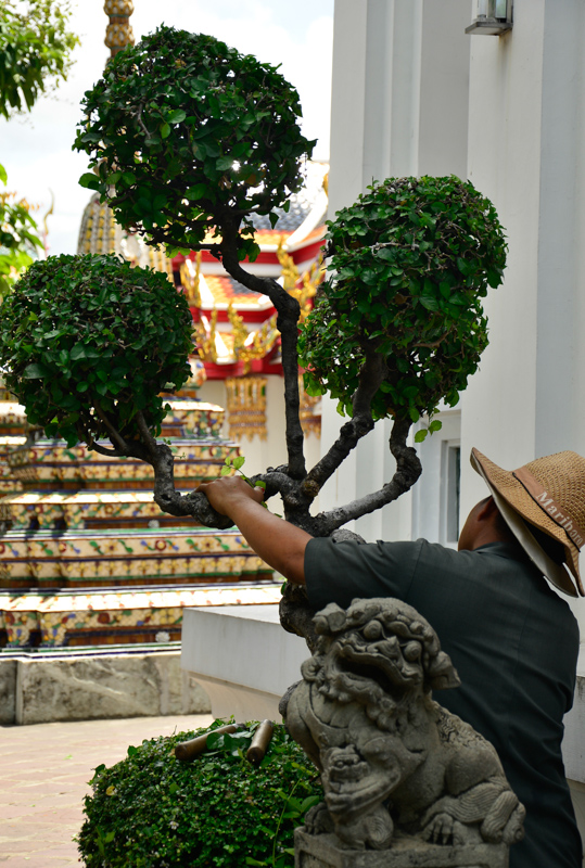 Wat Pho caretakers trimming temple bonsai