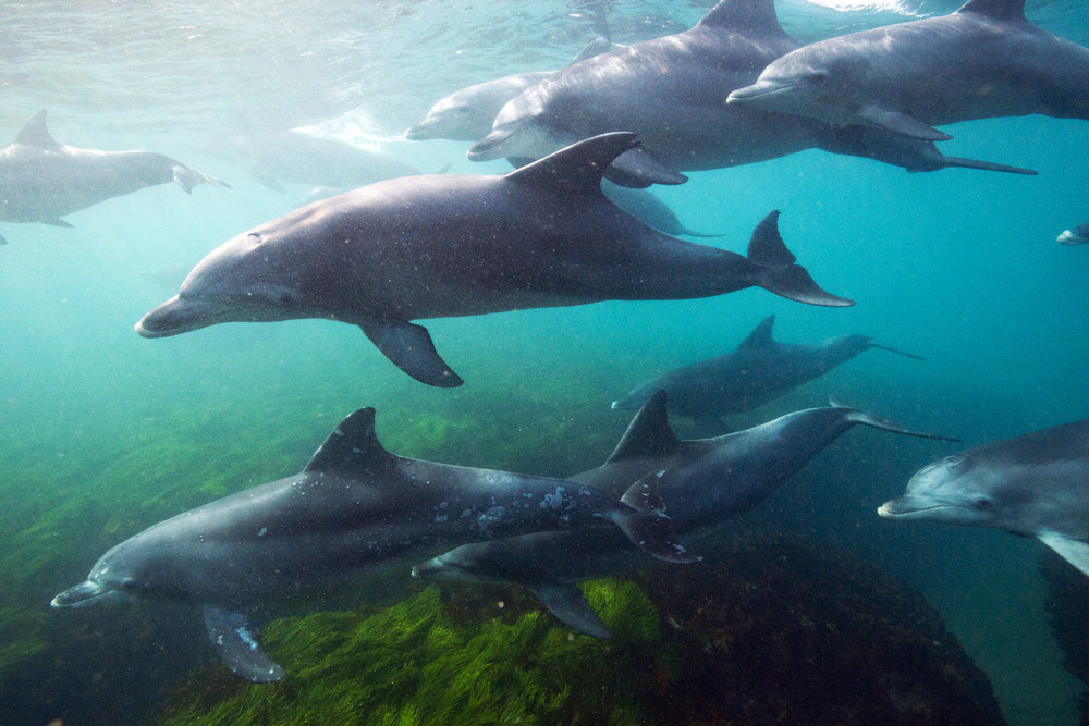 June  is a busy month for migrating mammals. I don't have a photo of one of those but I did have a very close encounter with a pod of dolphins who flew by me out at Little Avalon