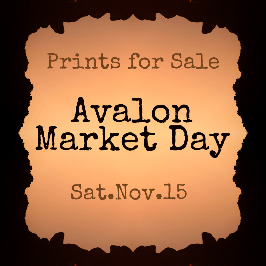 Avalon Market Day is on Saturday the 15th of November. We will have our first ever stall at he market. This is a great opportunity to come and say 'hi' if your in the area and pick yourself up some sweet framed prints at market prices. Regardless, the day will be all about meeting you and hearing some feed back on what you like or what you want to see more of. It's going to be fun.