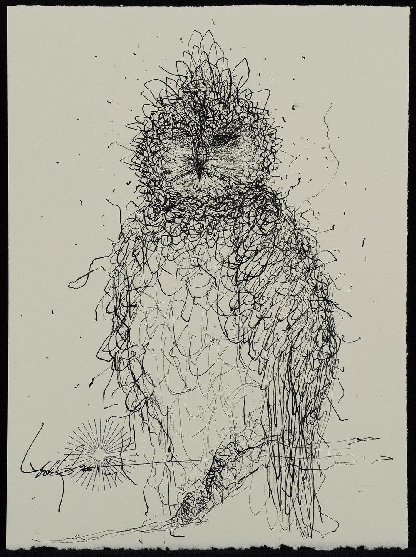 Owl-2500px.jpg