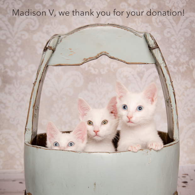 Madison V.jpg
