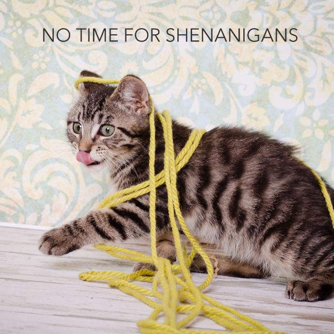 SHENANIGANS.jpg