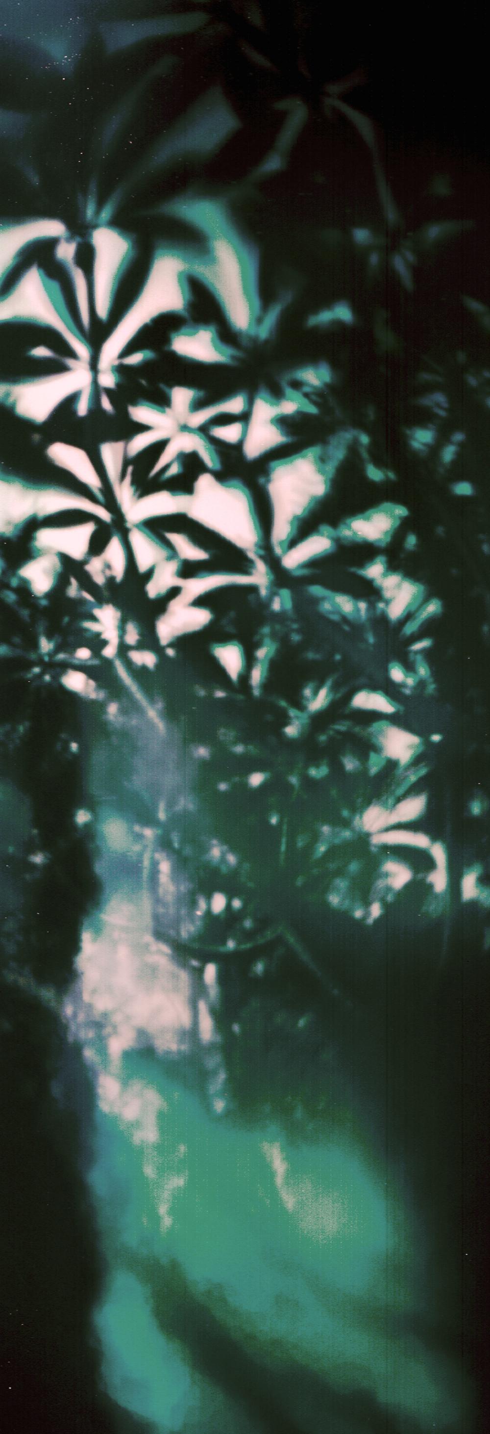 17 Days In A Frangipani Tree