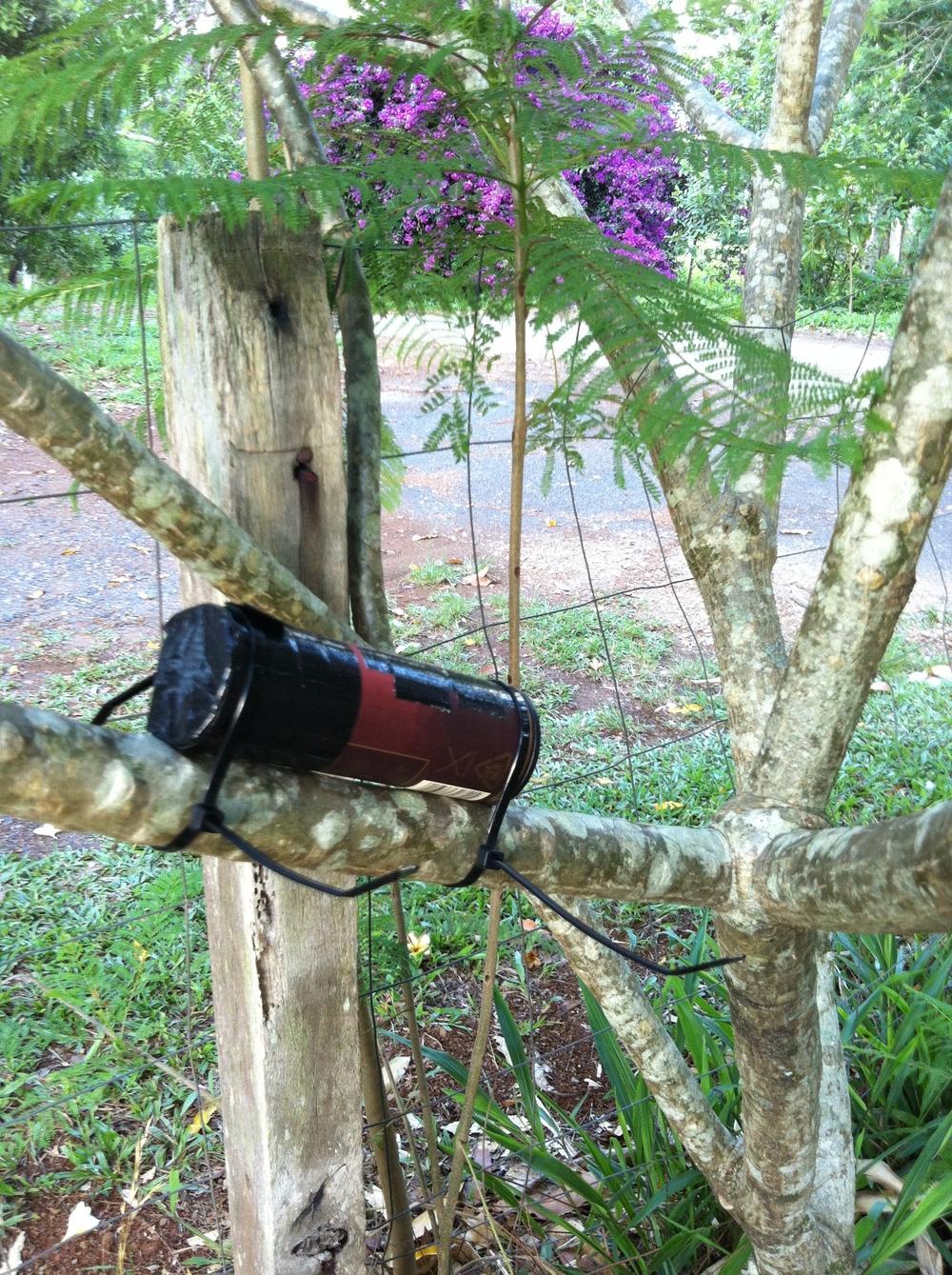 The Frangipani Tree Camera