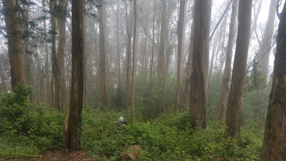 Tough trails