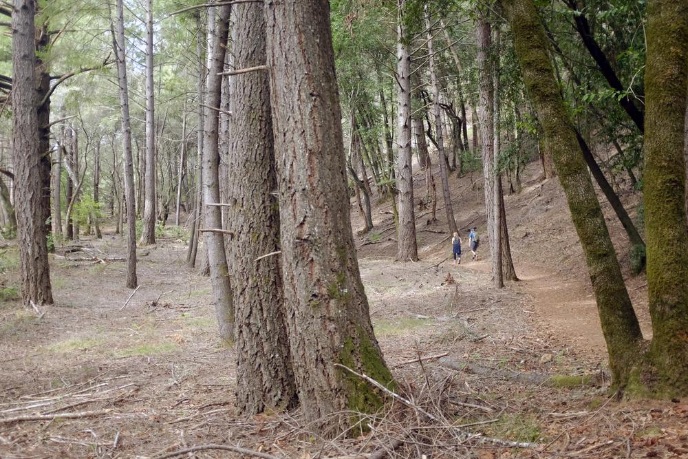 In redwoods