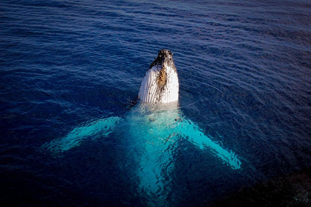 Whale Season   Happening December through May   BOOK TODAY