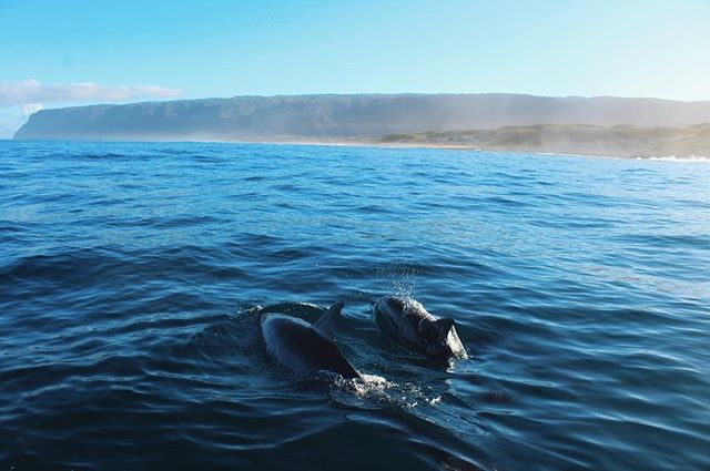 Fun morning surprises with @anagmendy 🐬 . . . . . . . . . . . .  #nakedplanet#beautifuldestinations #moodygrams#instagood #earthfocus #gramkilla#visualsofearth #visualsoflife #ftmedd#seekingthestars #ftwotw #featuremeseas#featurepalette #featuremeofh#quietthechaos #expofilm #expofilm3k#glimpseofhawaii #peoplescreatives#hawaiistagram #hawaiiunchained#bleachmyfilm #Canon_Photos#BestVacations #exploretocreate#HawaiianAirlines #Artofvisuals#nightimages #dominion #hawaii