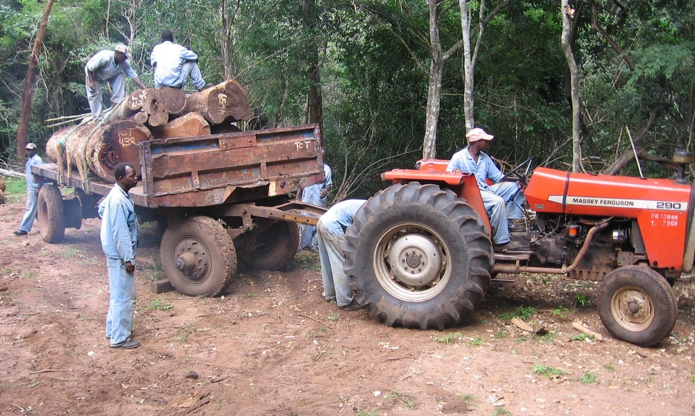 O transporte é feita por tractores e reboques para evitar recorrer a camiões   -  Transportation using tractors and trailers to prevent heavy trucks entering