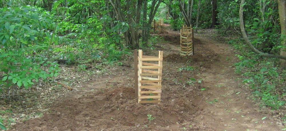As estradas que estão fechadas são plantadas com indígenas bebés para ajudar na reflorestação  -  Roads that are closed are planted with indigenous saplings to assist with forest regeneration