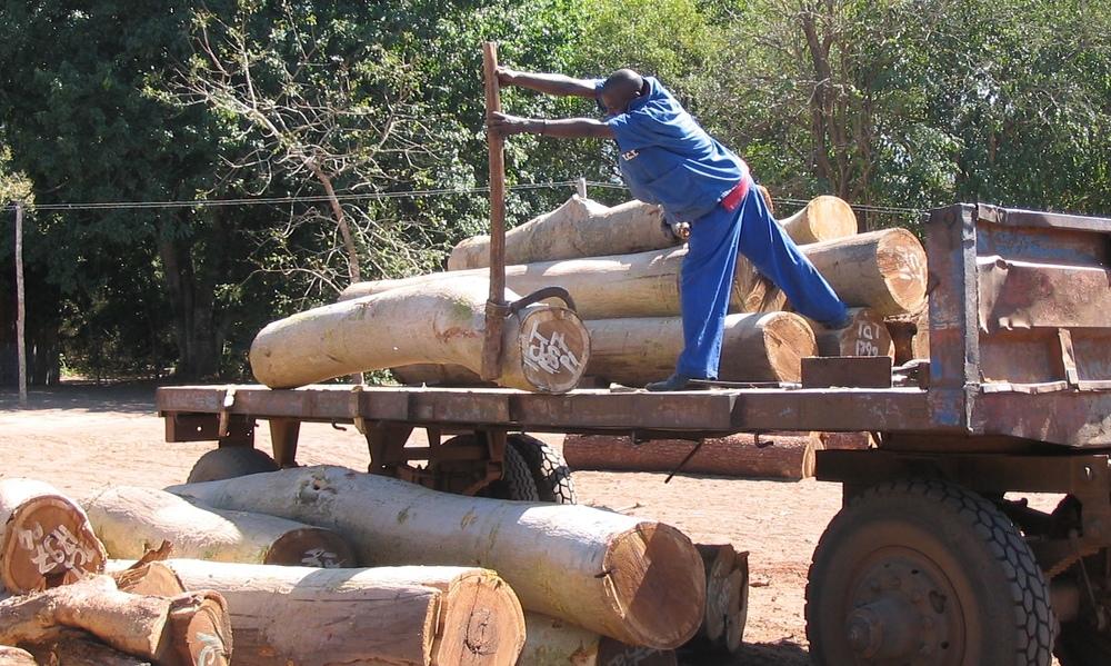 Descarregamento na serração  - Offloading at the sawmill
