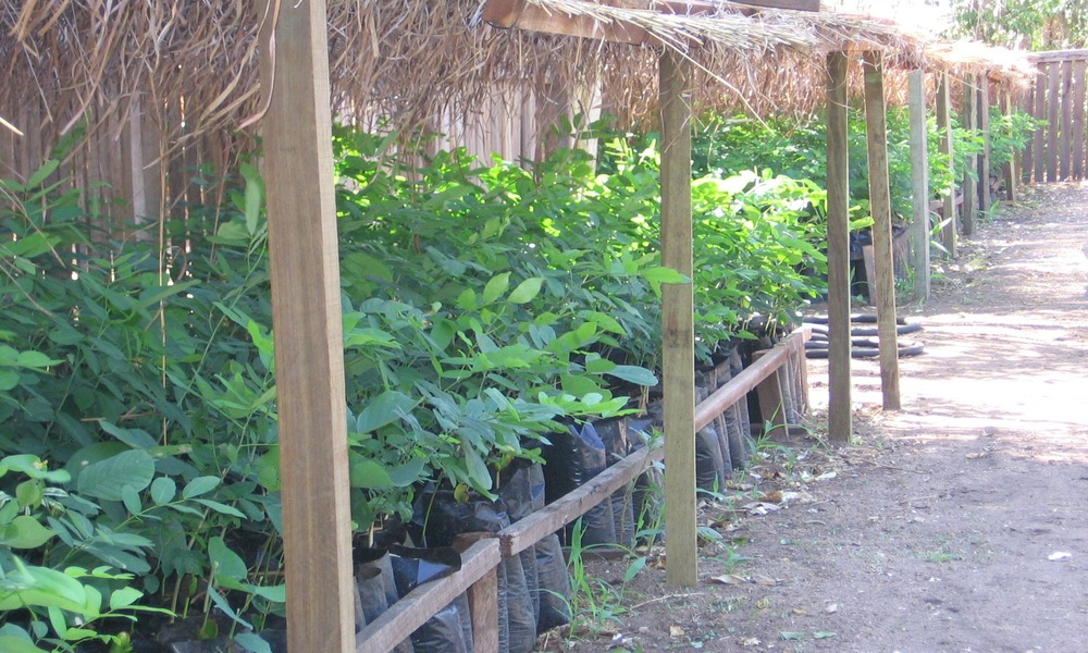 Viveiro da- TCT Dalmann – Catapu -nursery