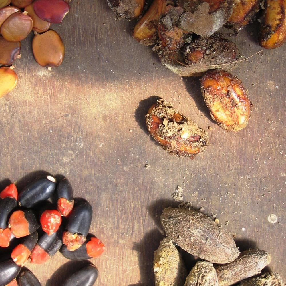 Sementes -Seeds