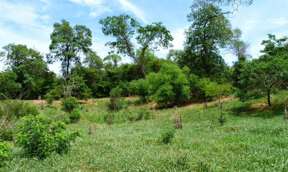 Plantação  -GAIT - Plantation