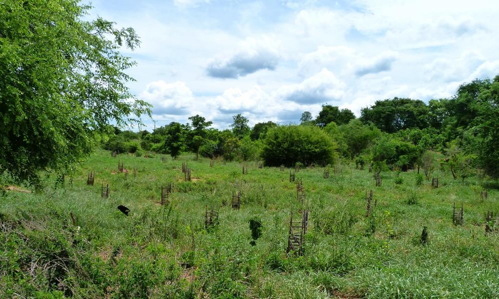 Plantação  -  GAIT - Plantation