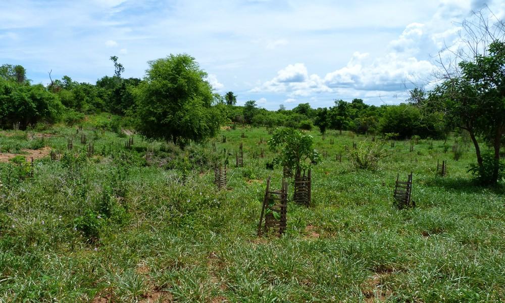 Plantação-GAIT - Plantation